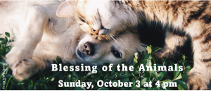 Blessing of the Animals @ United Church in Meadowood